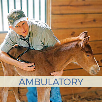 Peterson & Smith - Equine Ambulatory Services