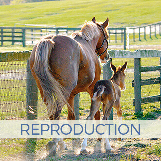Peterson & Smith - Equine Reproduction Services