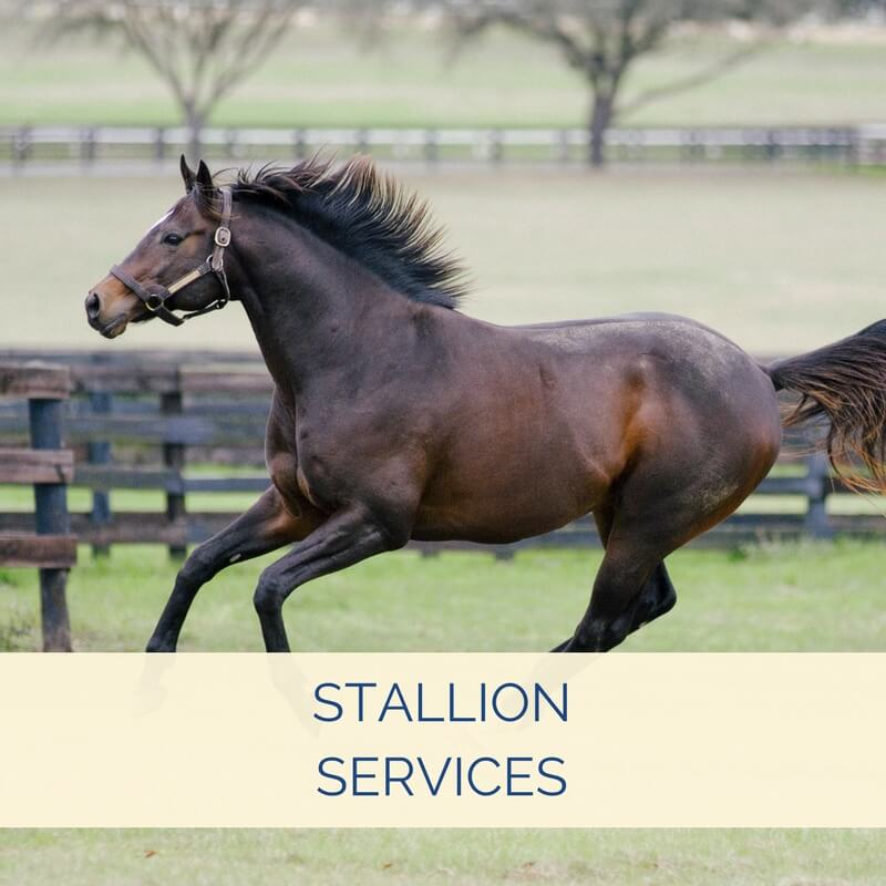 Equine Reproduction Center - Peterson & Smith Equine Hospital